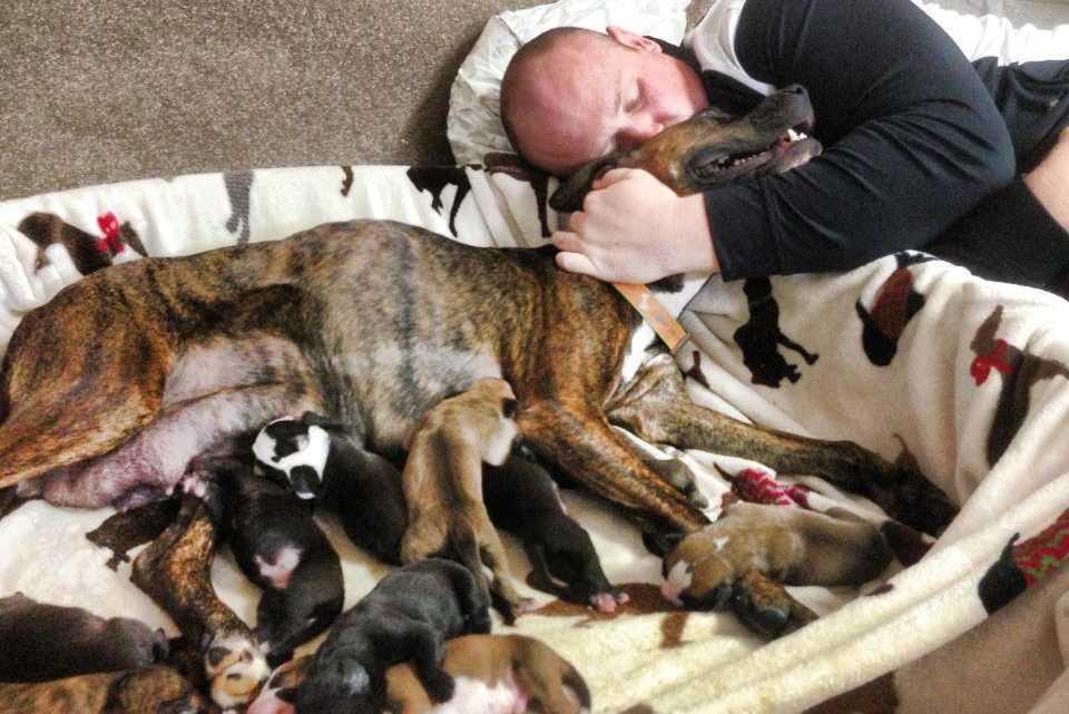 Dog Refuses To Give Birth, Vet Sees Ultrasound And Instantly Pulls Out Phone