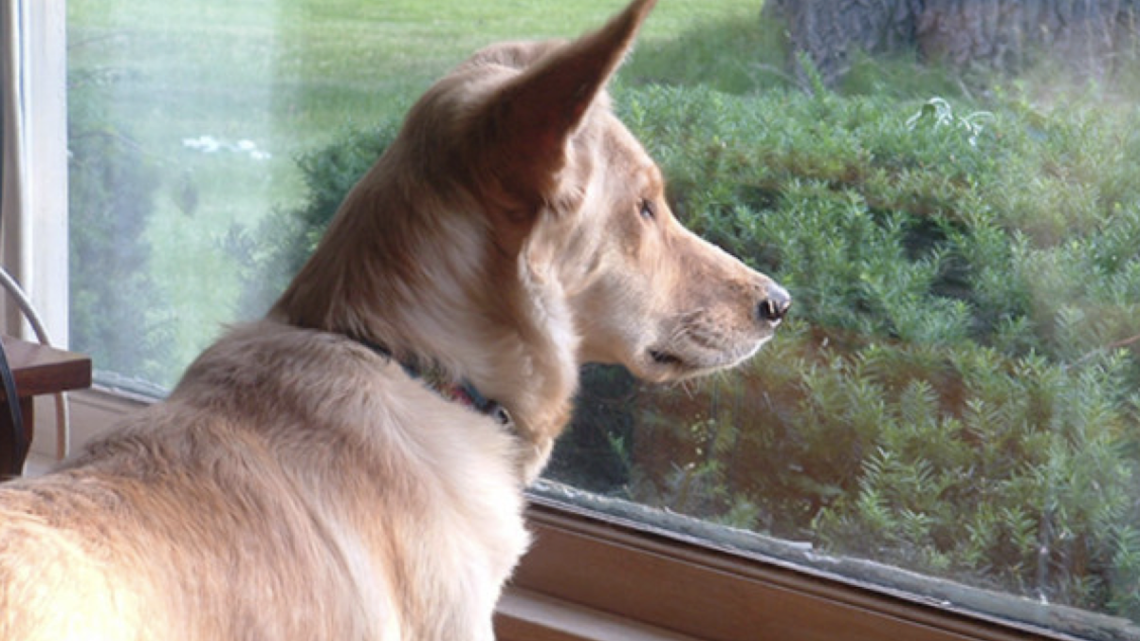 Sad Dog Stared Out The Window Every Day Until His Owner Wrote The Neighbor An Unbelievable Note