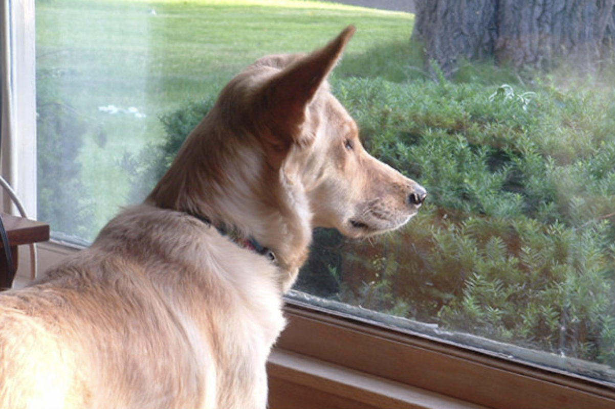 Sad Dog Stared Out The Window Every Day Until His Owner Wrote The Neighbor An Unbelievable Note Page 19 Of 21 Relatively Interesting