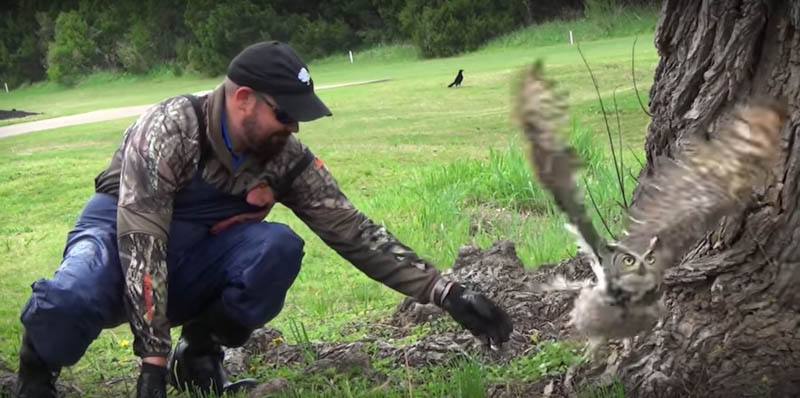 Guy Stumped When Owl Refuses To Leave, Looks Closer And Realizes He Has To Act Fast
