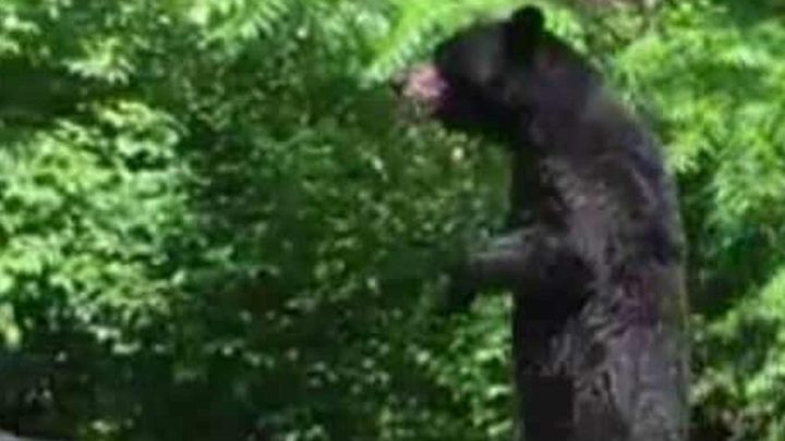 Policeman Laughs At Walking Bear Story, Goes Home And Realizes He Should've Listened