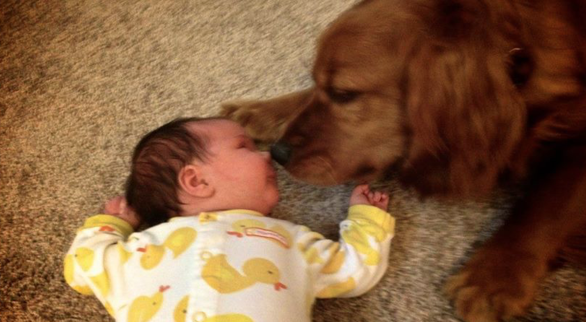 Parents Leave Newborn Alone With Dogs And Things Don't Go As Planned