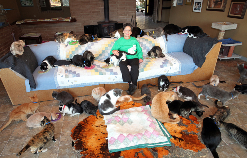 She Thought She Could Handle 1,000 Cats, But She Had No Idea