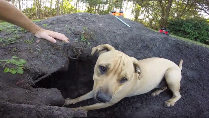 Man Digs Up Old Can, Opens It Up To Find It Untouched After 154 Years